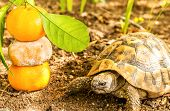 Turtle and Clementine