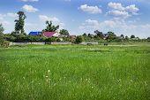 Green Meadow Outside The Village