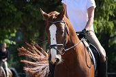 picture of bridle  - Portrait of chestnut sport horse with bridle - JPG