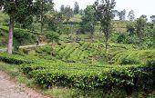 Road In Tea Plantation