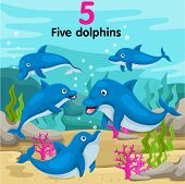 Illustrator of number five dolphins