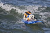 Happy Surfing Dog