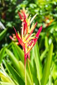 Bird Of Paradise, Flower