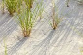 Wind Blown Grass On Sand Dune