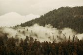 Mountain with fog and cloud in Sequoia National Park