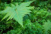 Beautiful Green Moss Texture
