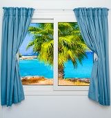 Window View Of The Sea Palm