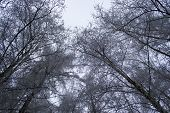 Snowy trees in park