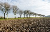 Bare Trees Along A Plowed Field
