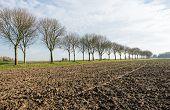 Bare Trees Along A Plowed Field