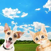 Funny little dog Jack Russell terrier and little red kitten outdoors