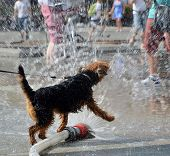 stock photo of firehose  - view of dog jumping in water from firehose - JPG
