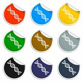 stock photo of double helix  - Vector DNA icon - JPG