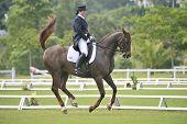 Dressage Equestrian