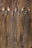 Dry Stalks Poppy Heads On A Wooden Board