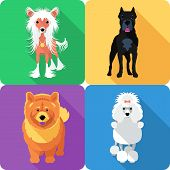 stock photo of poodle  - Vector dog Poodle - JPG
