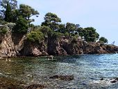 pic of vegetation  - Here you can find Esterel Corniche and  the extraordinary sight of the red Esterel rock plunging into the sea where the varying shades of green and blue change according to the seasons - JPG