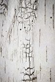 stock photo of scars  - full frame wallpaper of birch bark with scar and woodworm hole - JPG