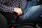 picture of driver  - Closeup shot of male driver fastens seat belt  - JPG