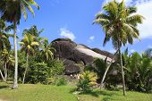 picture of enormous  - Enormous black granite rocks in the thickets of tropical vegetation - JPG