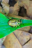 stock photo of leaf insect  - Insect on leaf - JPG