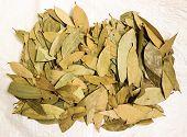 image of bay leaf  - Bunch of Bay leaf being dried under sunlight - JPG