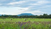 stock photo of haystack  - Early autumn field landscape with wildflowers freen grass haystacks trees and the hill in the distance - JPG