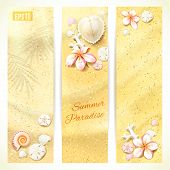 image of sand dollar  - Set of Vertical Banners with Sand and Seashells - JPG