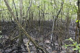 picture of ecosystem  - view of mangue tropical ecosystem in bahia brazil - JPG