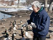 Senior Citizen Talking To Park Animals
