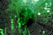 Spider web. Element of design.