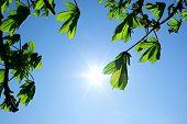 Постер, плакат: Ветви дерева и солнца Элемент дизайна