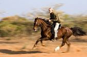 Senior man riding the horse in the bush, panning shot.