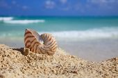 nautilus shell on beach  and blue tropical sea, shallow dof