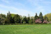 Landscape Photo of a Green Garden at Spring