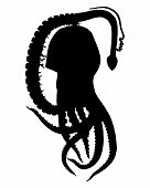 pic of kraken  - Detailed and colorful illustration of blanket octopus Silhouette - JPG