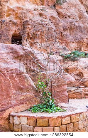 Small Tree In Alsiq In