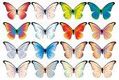 Vector butterflies. Different color variants