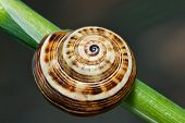 Snail Abstract