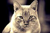 El Gato Viejo