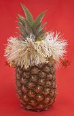 New Year's Pineapple On A Red Background.