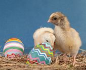 Two adorable Easter chicks in hay with colorful painted eggs
