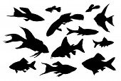 stock photo of guitarfish  - 12 detailed fish silhouettes isolated - JPG