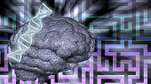 Dna abd brain puzzle