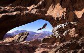 Bald Eagle In Utah