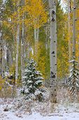 Cache River National Forest - Utah