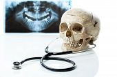 Human skull with stethoscope.