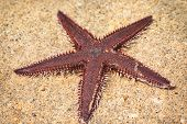 Starfish Lying On The Sand. Starfish Lying On The Sand On The Beach. poster