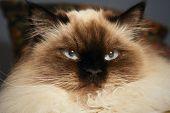 Stern Cat