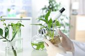 Lab Assistant Holding Beaker With Plant On Blurred Background, Closeup. Biological Chemistry poster
